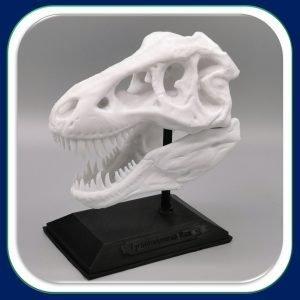 Solutions Efikeco - Crâne de T-REX 1
